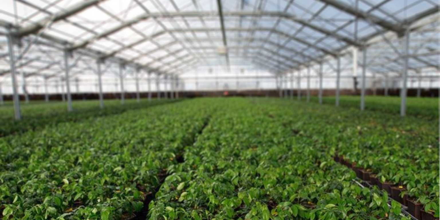 CharGrow growers greenhouse blur