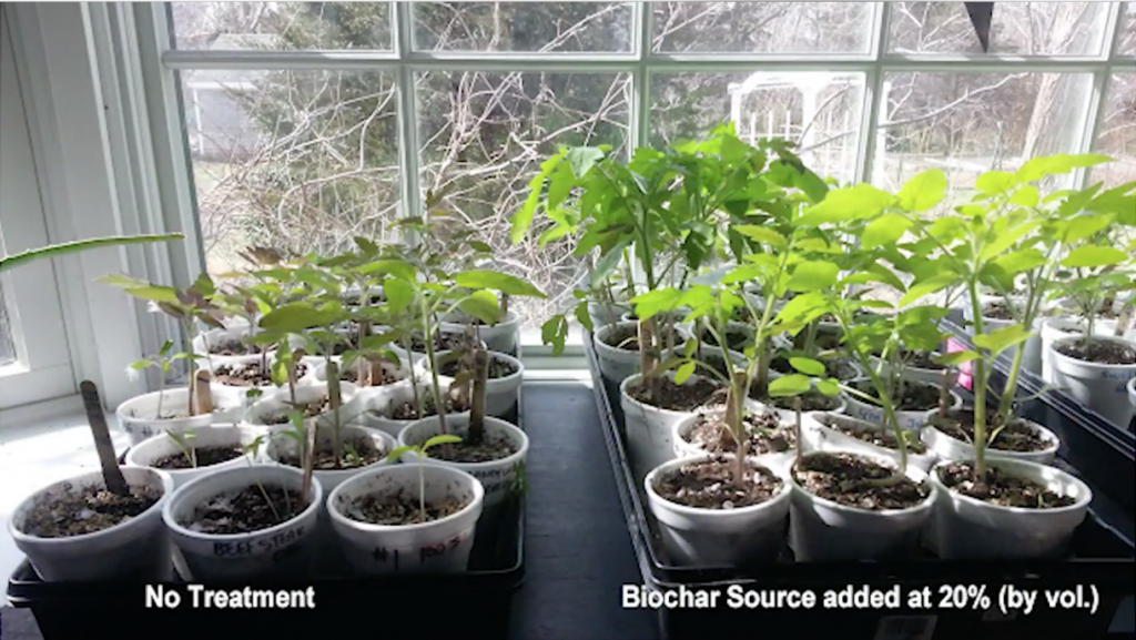 Growing tomatoes with BioChar Source