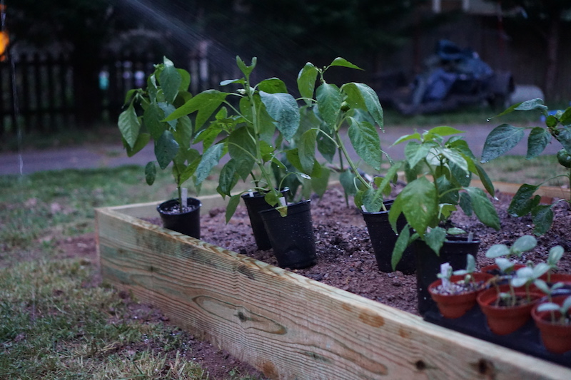 home garden raised bed with biochar applied